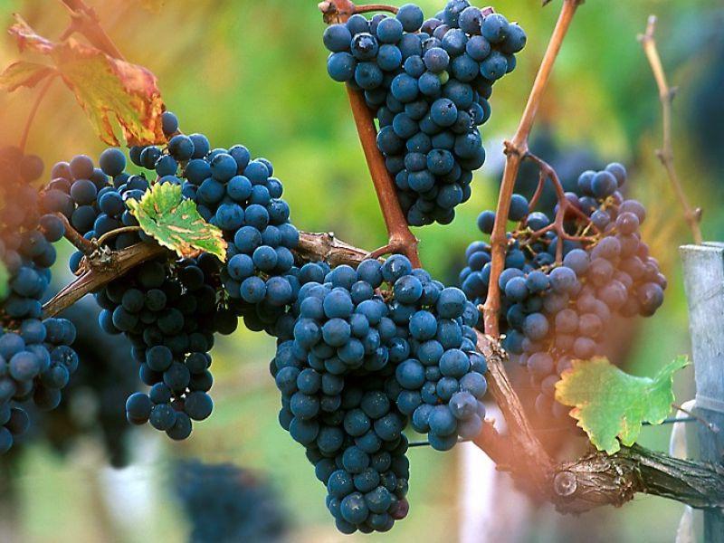 7 ha de vignes, AOC Blaye Côtes de Bordeaux