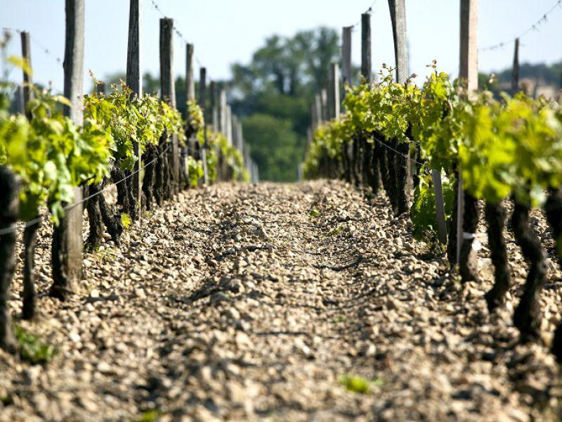 Très bel outil de production en AOP Bordeaux à 10 min de la rocade !