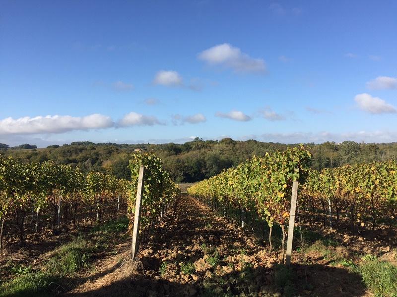 Propriété rentable - 40ha en AOC Bordeaux rouge et blanc