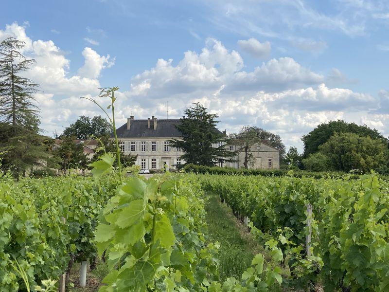Domaine de plus de 80 ha dont 60 ha de vignes en AOC Bordeaux et Côtes de Bourg