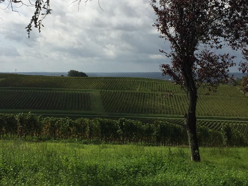 Outil de production fonctionnel et rentable en AOC Bordeaux