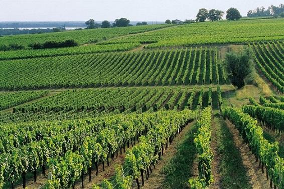 Vaste propriété en AOC Côtes de Blaye
