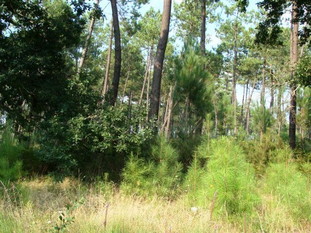 Propriété Forestière Mimizan Bourg