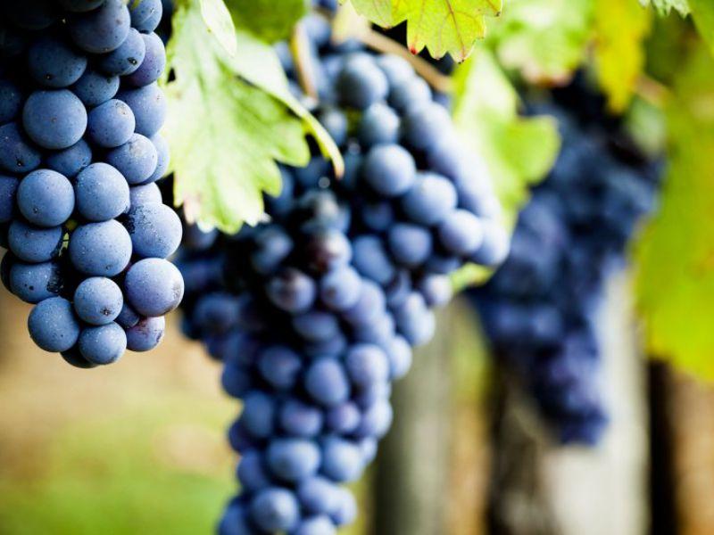 Propriété viticole de 4 hectares en Agriculture Biologique, AOC Médoc