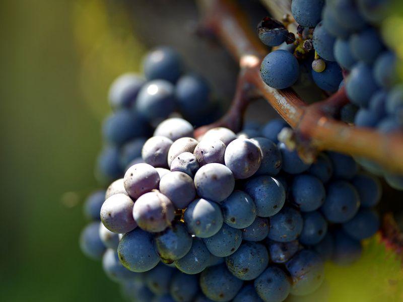 Exploitation viticole en AOC Bordeaux/Bordeaux Supérieur et Entre-deux-Mers