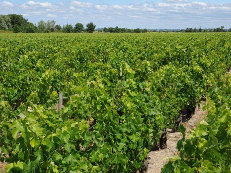 Opportunité exceptionnelle: Vignoble en AOC Saint-Estèphe et Haut-Médoc